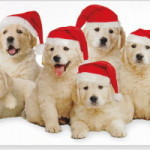 Column #455 Happy Holidays from the Family 'Toid