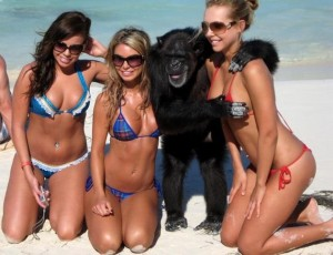 Monkey with girls