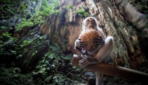 monkey-coconut