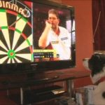 Column #530  Dogs – the cure for all darts' woes!